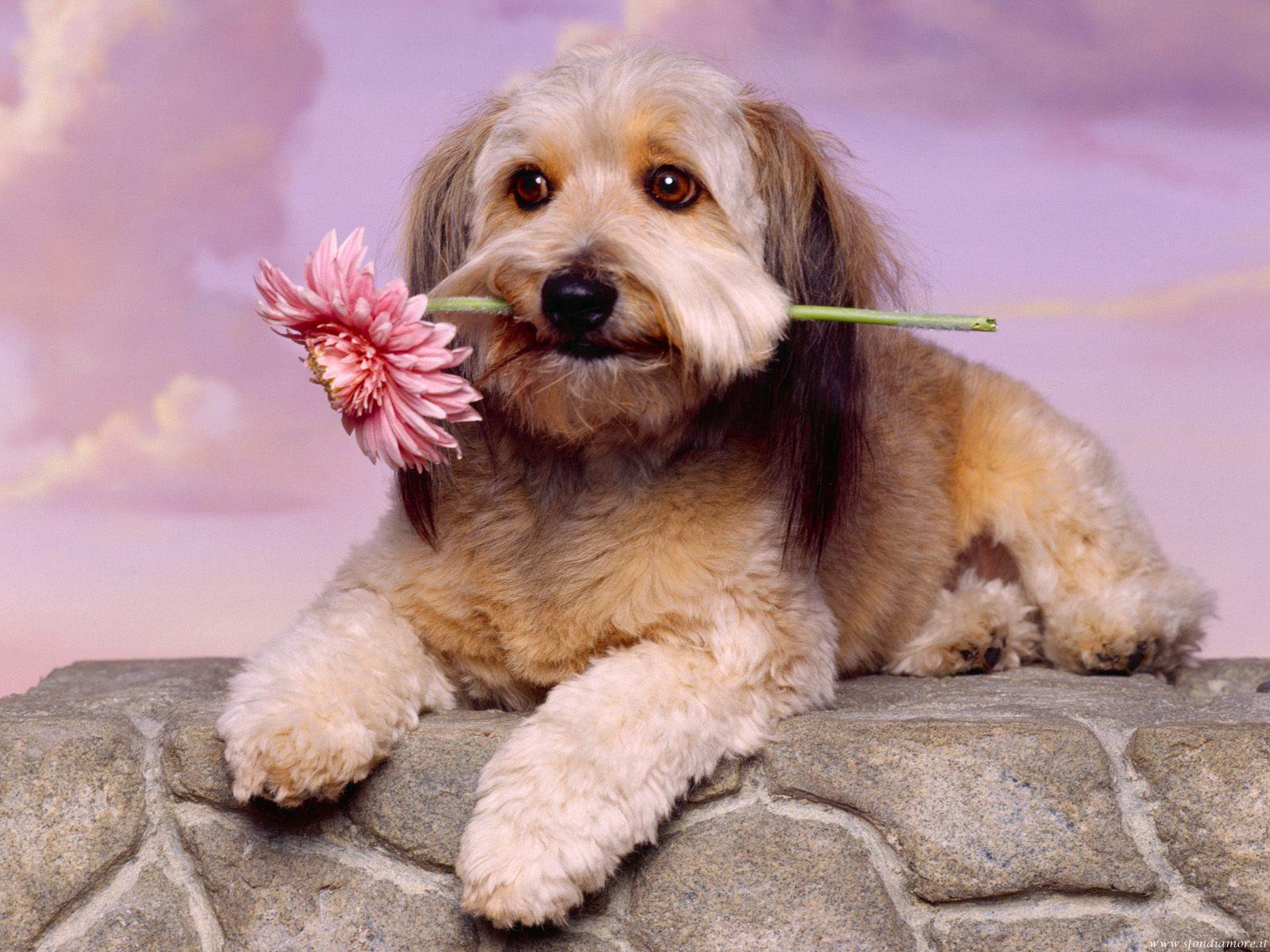 Sfondi Amore cane